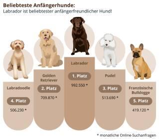 Die beliebtesten Hunde