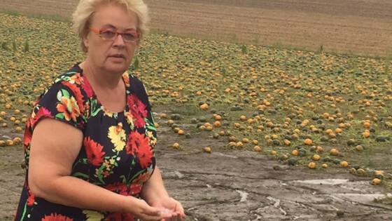 Agrarlandesrätin Verena Dunst bei Besichtigung von Hagelschäden im Raum Deutsch Schützen