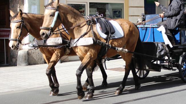 Kutsche Kutschenfahrt Pferdekutsche Symbolbild