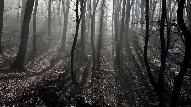 Krimi Wald Baum Bäume mysteriös Grusel Halloween Buch Symbolbild