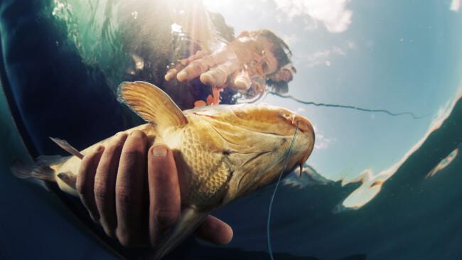 Symbolbild Fishmania Fisch Angeln