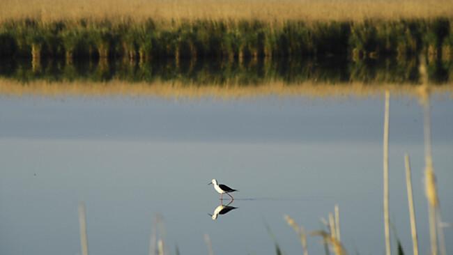 Vogelparadies Neusiedler See