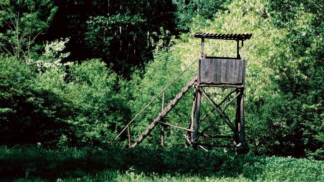 Stockerau Jagd bleibt heißes Eisen Hochstand Symbolbild