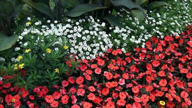 Symbolbild Blumen Blumenbeet in einem Park   Blumenbeet in einem Park Park,Blumen,Bunt,Pflanzen,Beet,Blumenbeet Copyright by BilderBox- Erwin Wodicka,A-4062 Thening; August 1999
