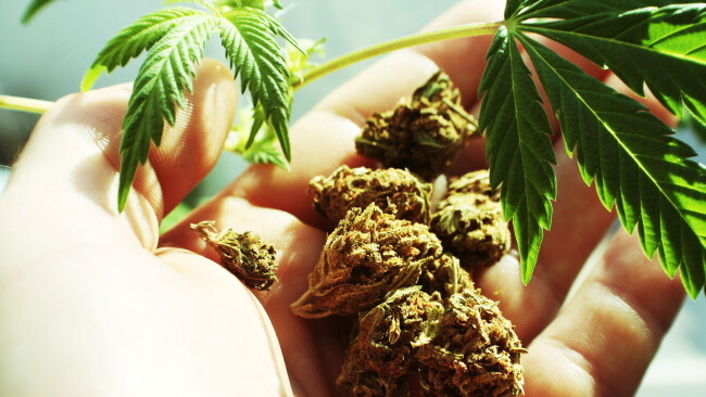 Drogen Cannabis Symbolbild