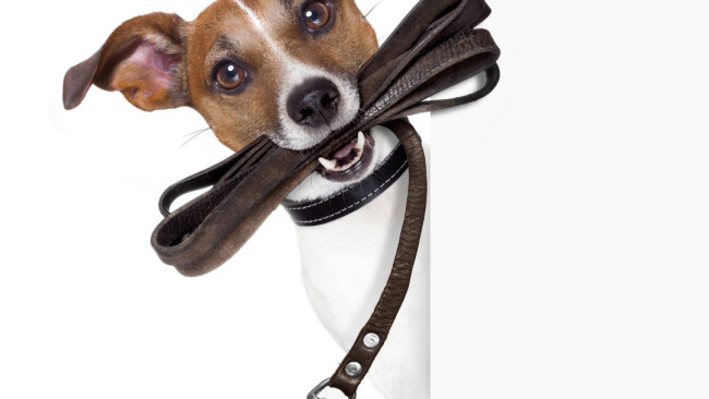 Hund Hunde Mattersburg Hundezone nun fix Symbolbild