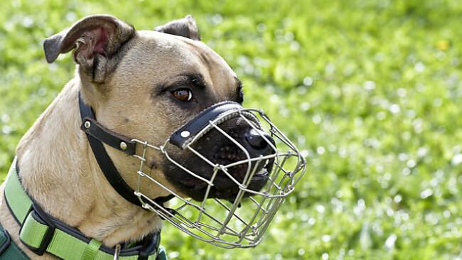 Maulkorb- und Leinenpflicht für Listenhunde
