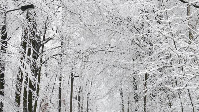 Winter Schnee Schneefahrbahn Auto Verkehr Schneematsch Fahrbahnverhältnisse Wald Bäume