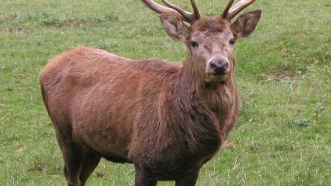 Sabotage-Akt im Tierpark Buchenberg