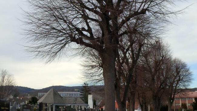 Bäume Friedhof Symbolbild