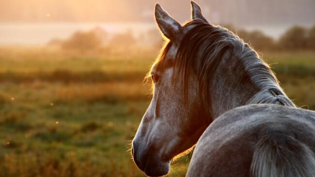 Pferd Symbolbild