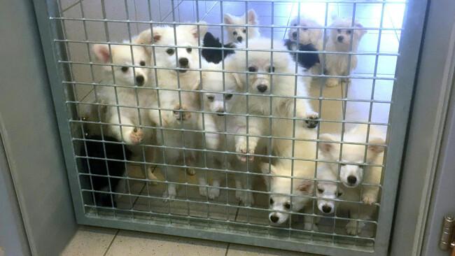 Hunde in Quarantäne