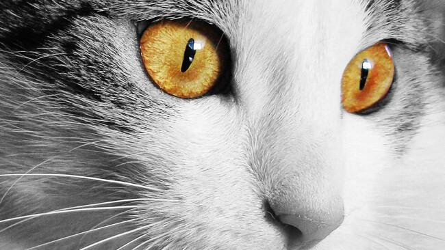 Katzen Symbolbild