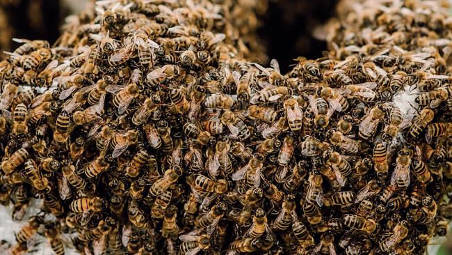 Bienen in Quarantäne