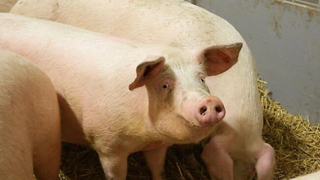 Das Tierschutzvolksbegehren soll ihr Leben besser machen