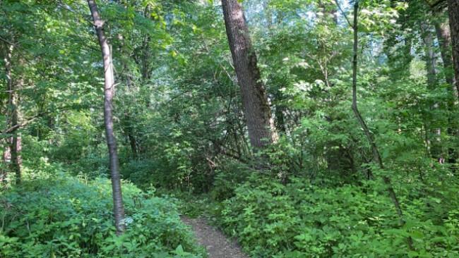 In diesem Bereich am Innufer in Kufstein wurde die Leiche gefunden