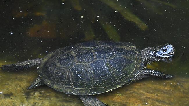 Vor allem Gelege der Reptilien im Nationalpark Donau-Auen geschützt