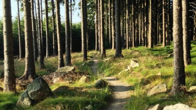 440_0008_8181302_eis37wagi_trail.jpg