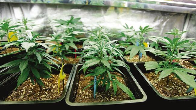 Polizei-Erfolg: Drogen-Brüder gefasst Seit etwa zwei Jahren sollen die Brüder Cannabis verkauft haben. Die Drogen bauten die Brüder selbst an.