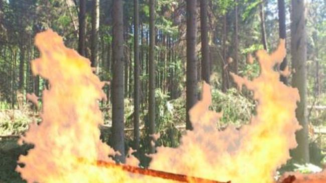 Waldbrand Brand Feuer Wald Symbolfoto