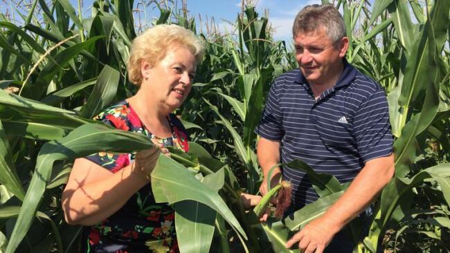 Bauern bangen um Ernte Landesrätin Verena Dunst