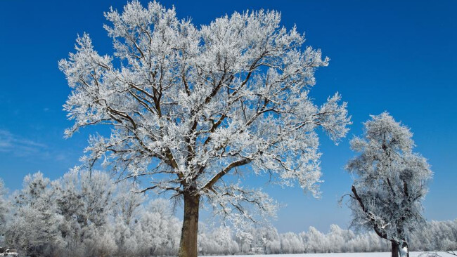 Landschaft mit Raureif, Frost und Schnee auf Baum im Winter Eine Landschaft mit Raureif, Frost und Schnee auf Baum im Winter.